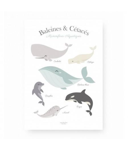 Baleines & Cétacés