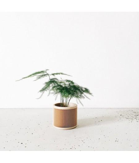 Pot plante d'intérieur et captus made in France