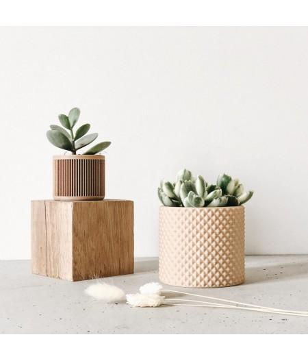 Pot design plante d'intérieur et captus