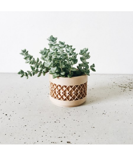 Superbe pot design plante d'intérieur et captus
