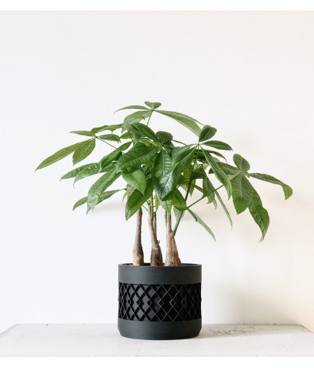 Cache pot noir design pour plantes vertes