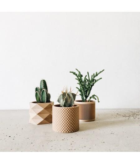 Set de 3 pots petite plante verte et captus