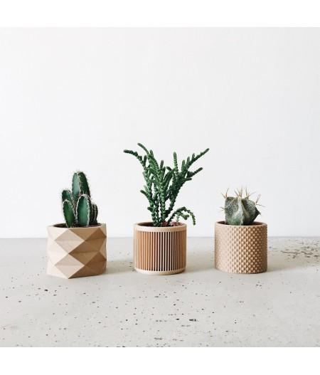 Set de 3 pots plante verte et captus