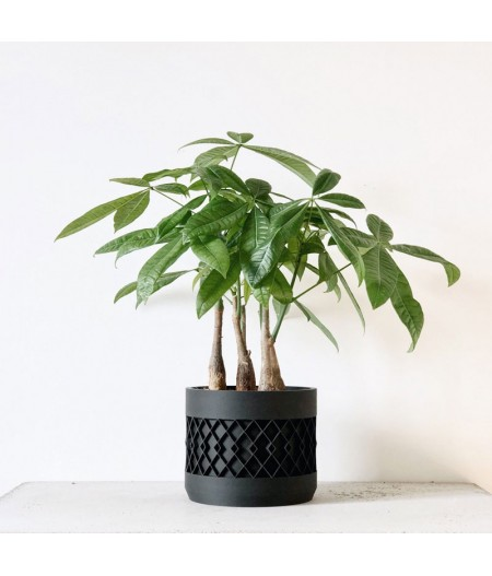 Pot pour plante d'intérieur et captus naturel