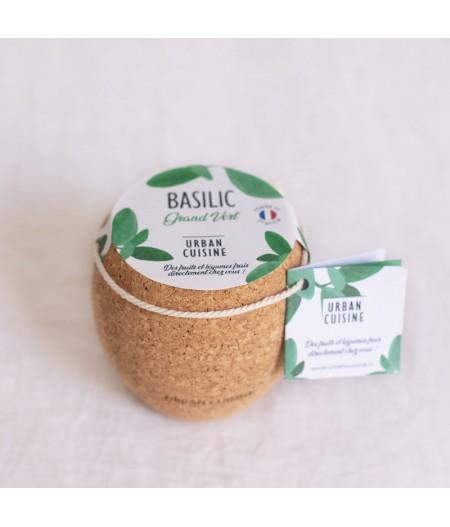 Potager d'intérieur basilic vert bio