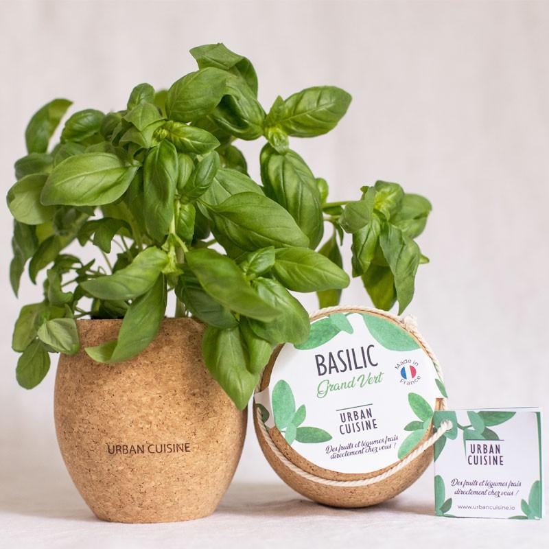 Basilic vert bio en pot en liège